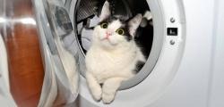 Mačak preživio pranje u veš mašini!